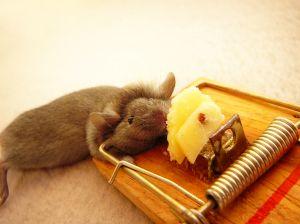 Ako na myši?