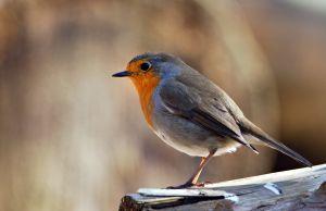 Kŕmite vtáčiky?