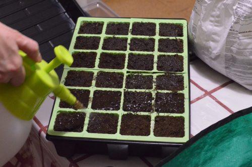 rosení semen