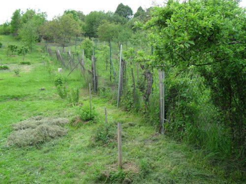opravený starý plot